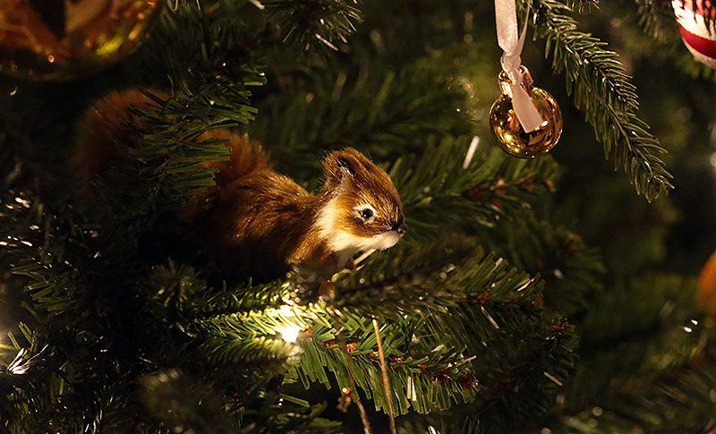 Ekorre i julgran